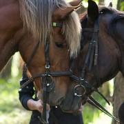 Jodinėjimas žirgais